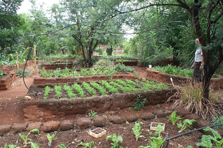 vegetable gardens at Tapologo