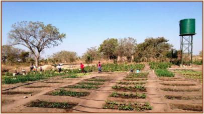 News from Tiyimiseleni in partnership with Savannah Lodge, Mpumalanga